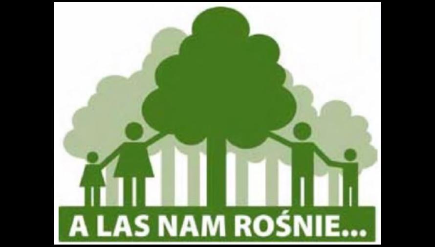 Poradnik dla właścicieli lasów