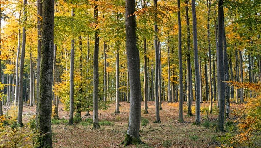 zdjęcie lasu: Johannes Plenio
